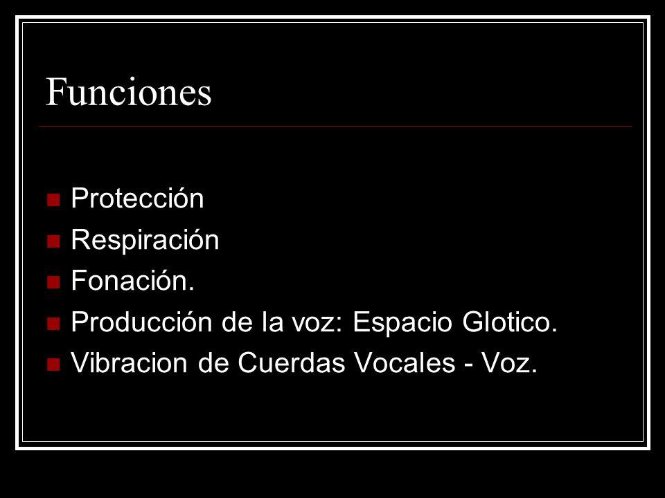 Funciones Protección Respiración Fonación.
