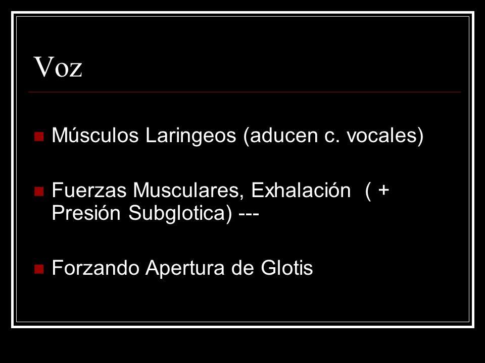 Voz Músculos Laringeos (aducen c. vocales)