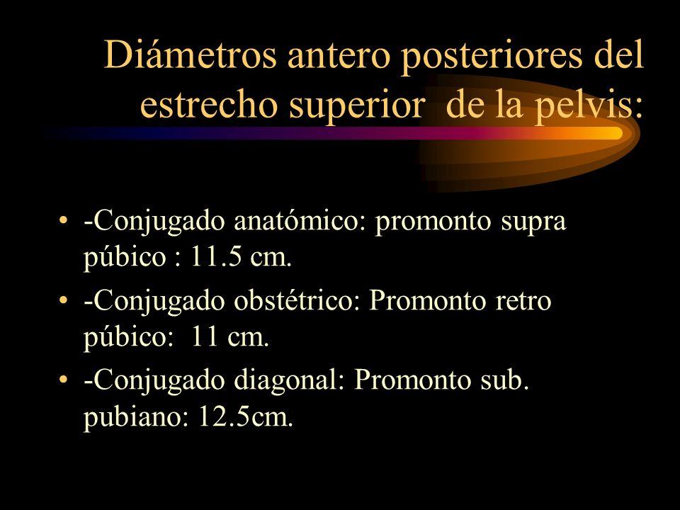 Diámetros antero posteriores del estrecho superior de la pelvis: