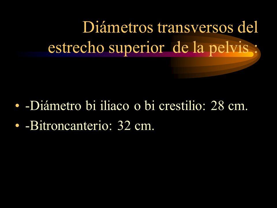Diámetros transversos del estrecho superior de la pelvis :