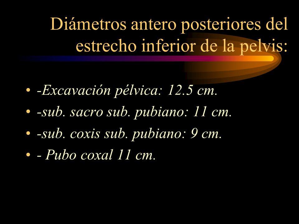 Diámetros antero posteriores del estrecho inferior de la pelvis: