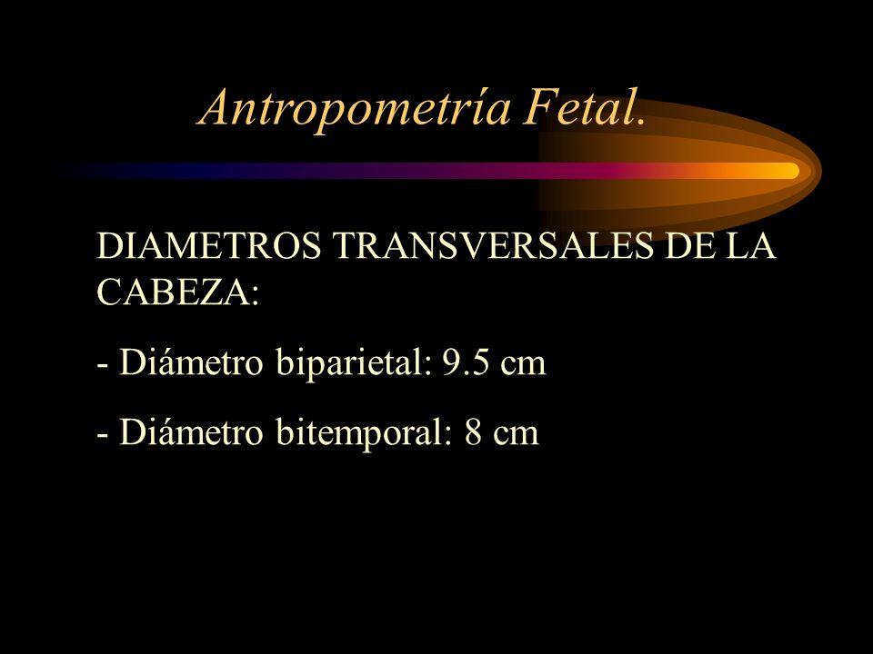 Antropometría Fetal. DIAMETROS TRANSVERSALES DE LA CABEZA: