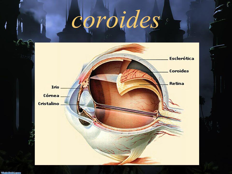coroides