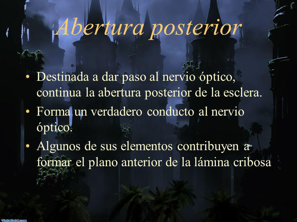 Abertura posteriorDestinada a dar paso al nervio óptico, continua la abertura posterior de la esclera.