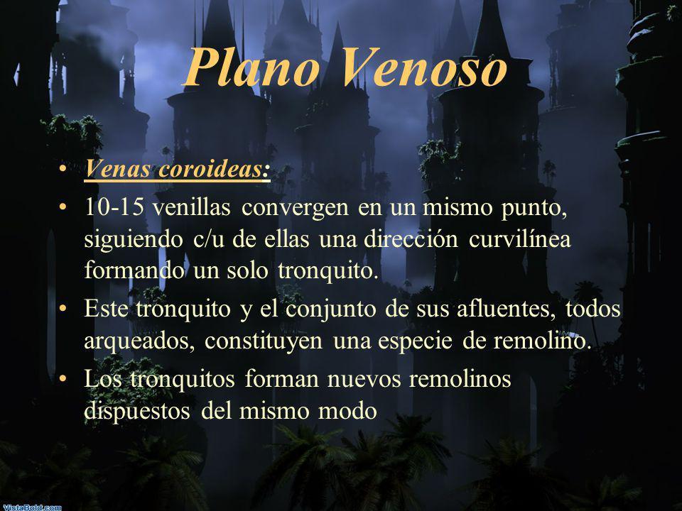 Plano Venoso Venas coroideas: