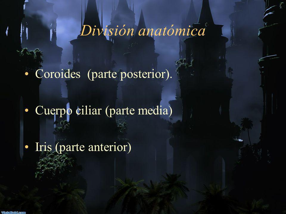 División anatómica Coroides (parte posterior).