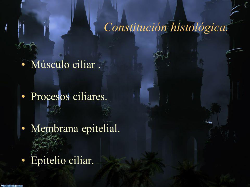 Constitución histológica.