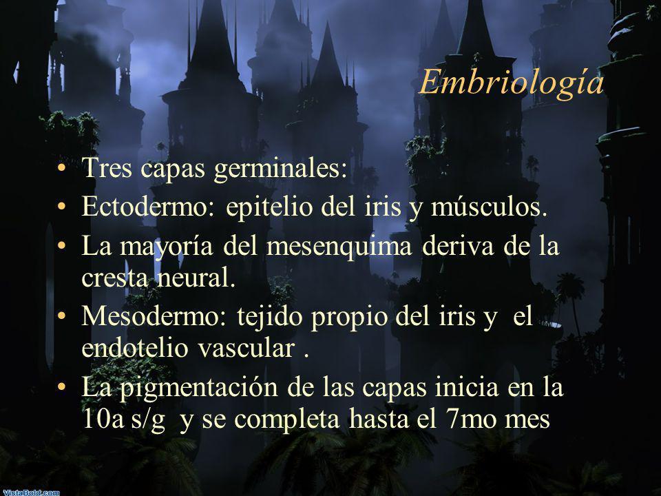 Embriología Tres capas germinales: