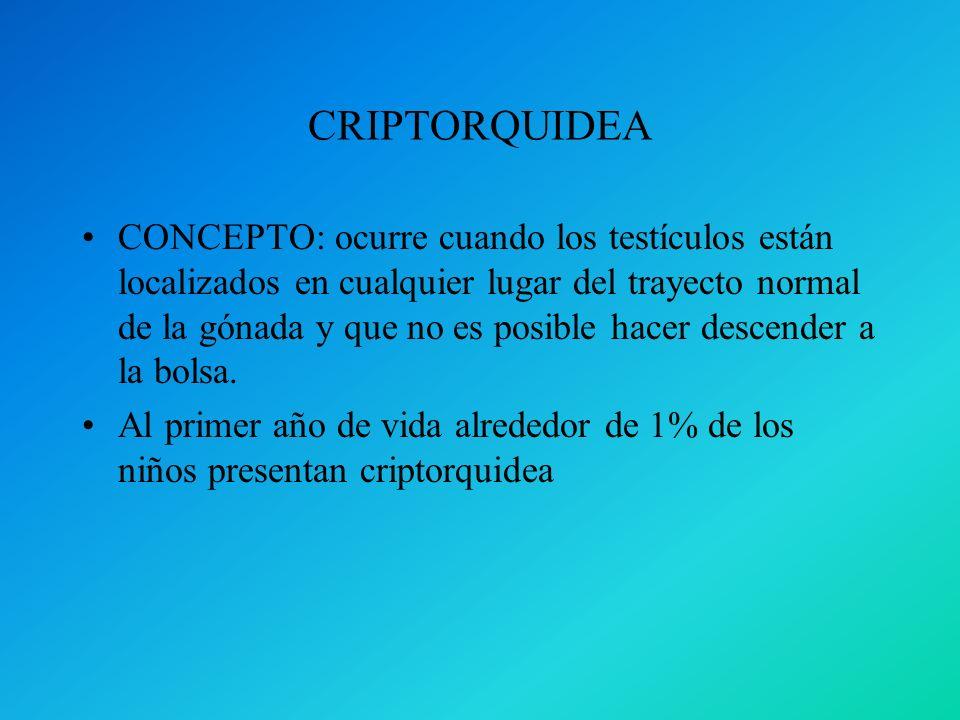 CRIPTORQUIDEA