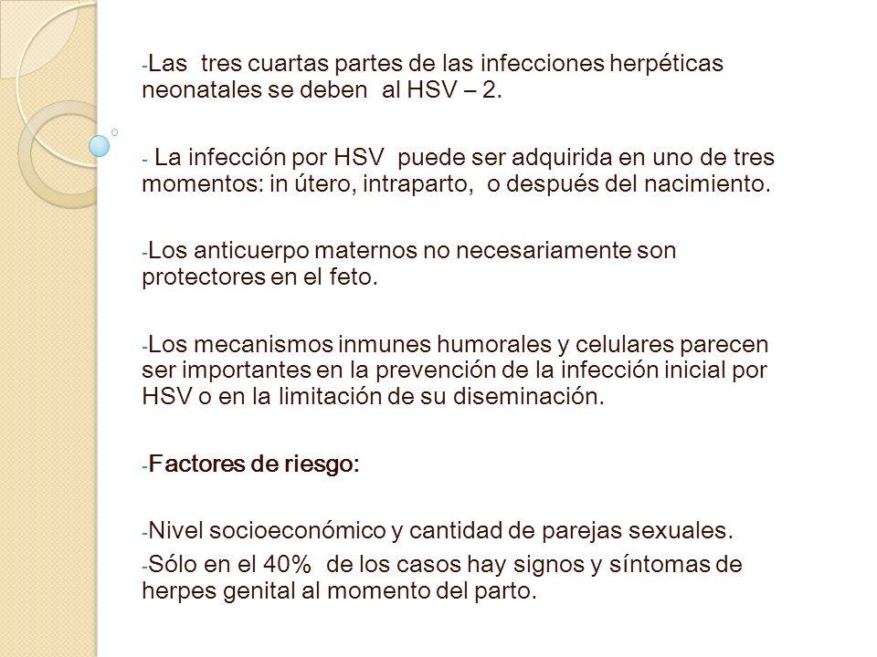 Las tres cuartas partes de las infecciones herpéticas neonatales se deben al HSV – 2.