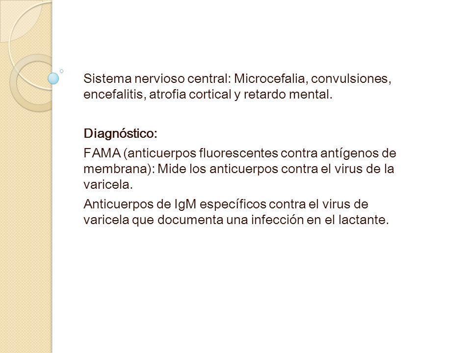 Sistema nervioso central: Microcefalia, convulsiones, encefalitis, atrofia cortical y retardo mental.