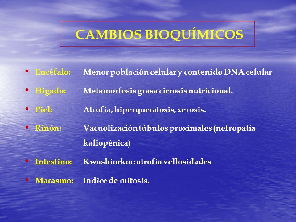 CAMBIOS BIOQUÍMICOS Encéfalo: Menor población celular y contenido DNA celular. Hígado: Metamorfosis grasa cirrosis nutricional.