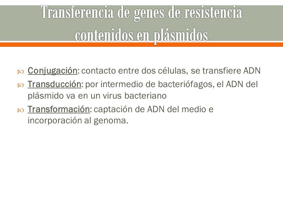 Transferencia de genes de resistencia contenidos en plásmidos