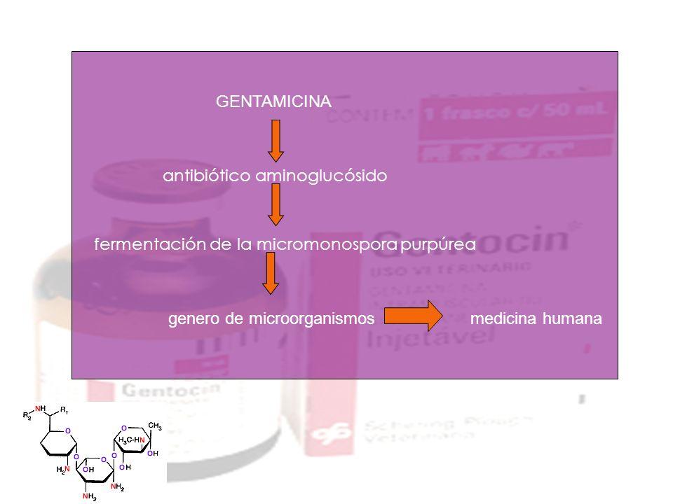 antibiótico aminoglucósido