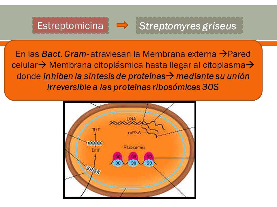 Estreptomicina Streptomyres griseus