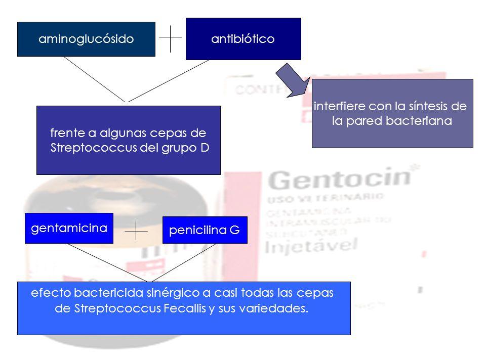 interfiere con la síntesis de la pared bacteriana