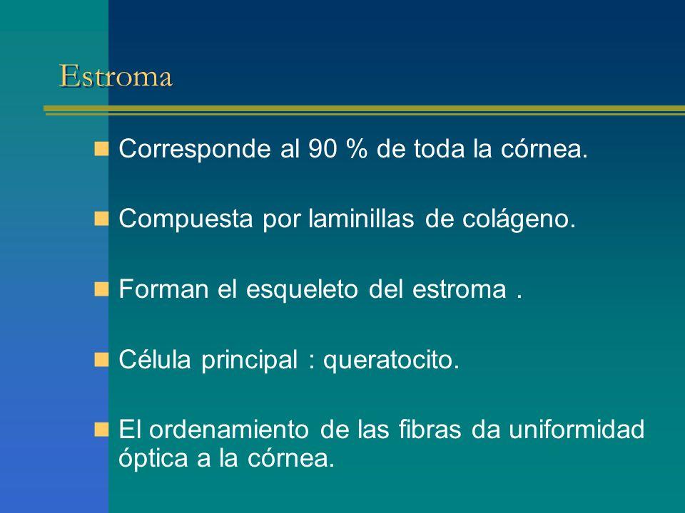 Estroma Corresponde al 90 % de toda la córnea.