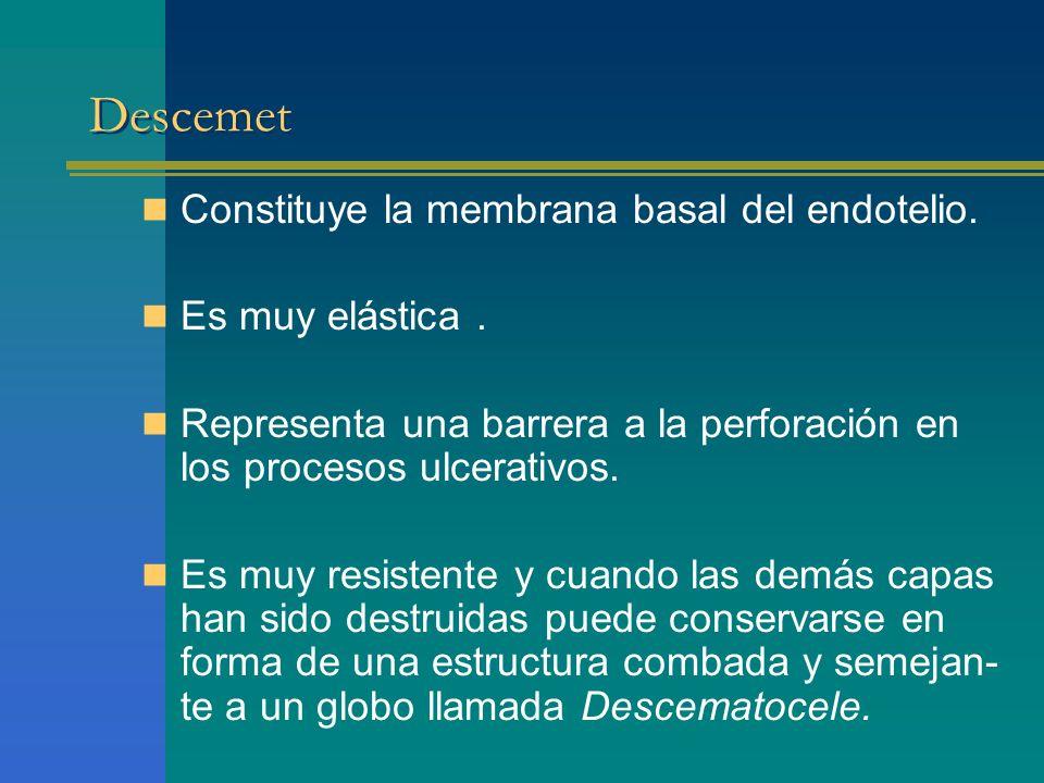 Descemet Constituye la membrana basal del endotelio. Es muy elástica .