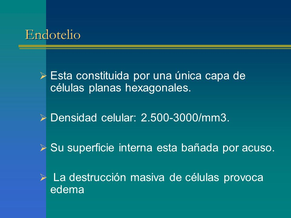 Endotelio Esta constituida por una única capa de células planas hexagonales. Densidad celular: 2.500-3000/mm3.