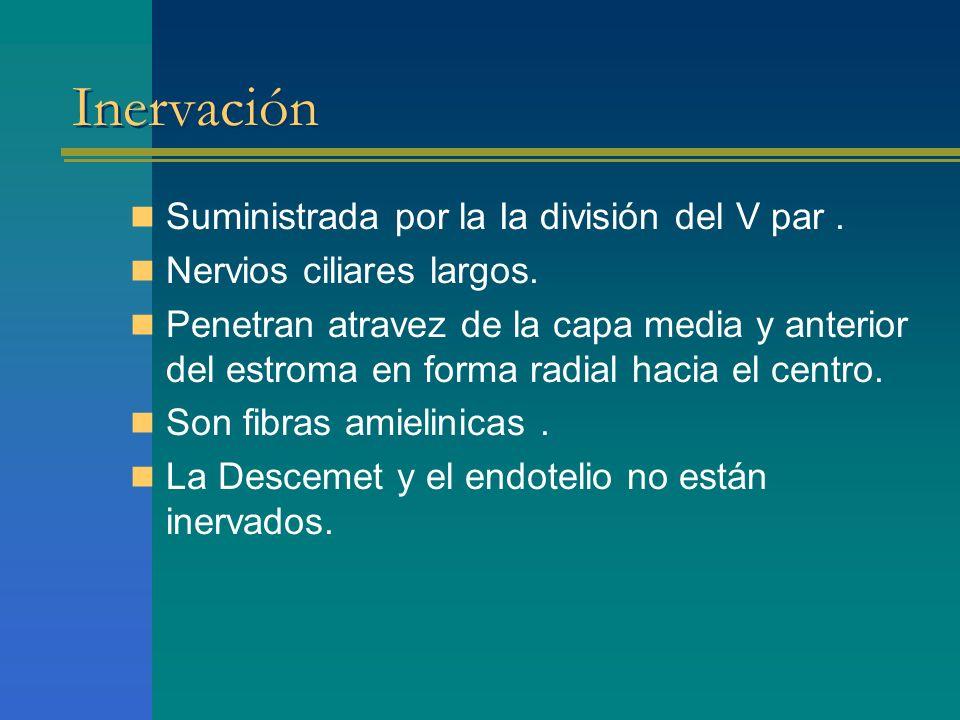 Inervación Suministrada por la Ia división del V par .