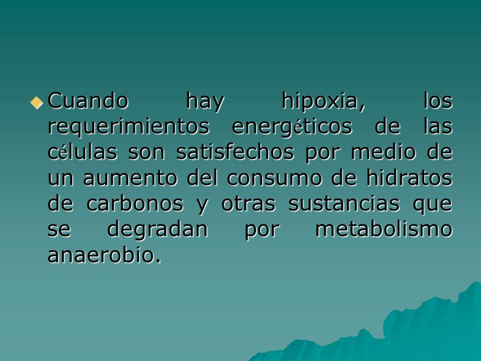 Cuando hay hipoxia, los requerimientos energéticos de las células son satisfechos por medio de un aumento del consumo de hidratos de carbonos y otras sustancias que se degradan por metabolismo anaerobio.