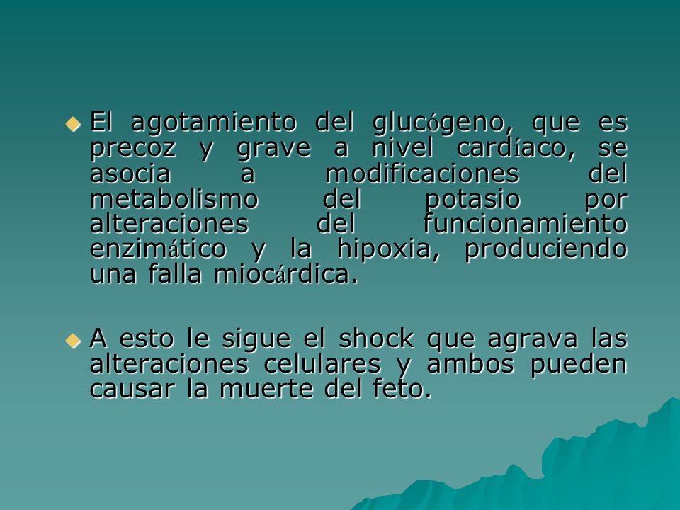 El agotamiento del glucógeno, que es precoz y grave a nivel cardíaco, se asocia a modificaciones del metabolismo del potasio por alteraciones del funcionamiento enzimático y la hipoxia, produciendo una falla miocárdica.