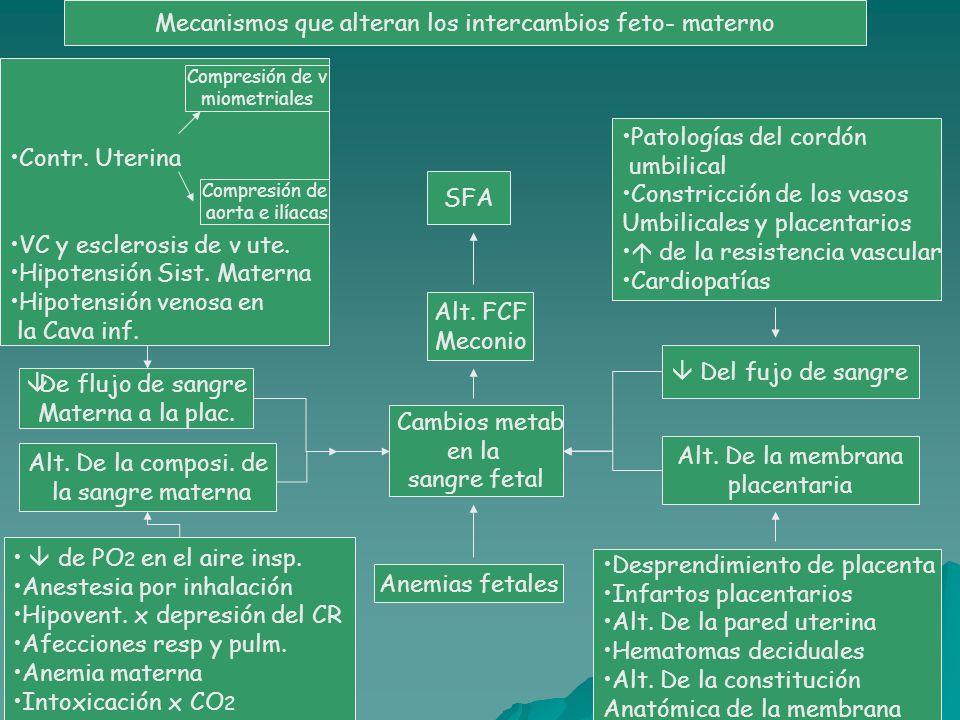Mecanismos que alteran los intercambios feto- materno