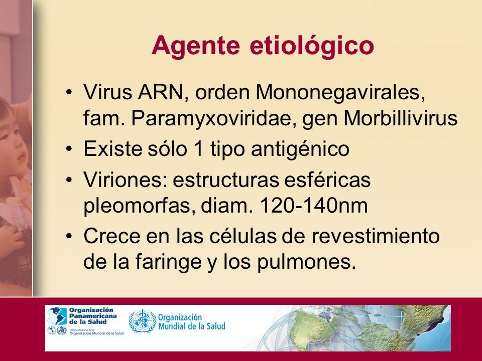 Agente etiológico Virus ARN, orden Mononegavirales, fam. Paramyxoviridae, gen Morbillivirus. Existe sólo 1 tipo antigénico.
