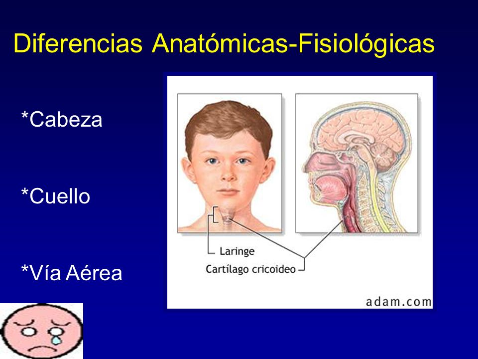 Diferencias Anatómicas-Fisiológicas