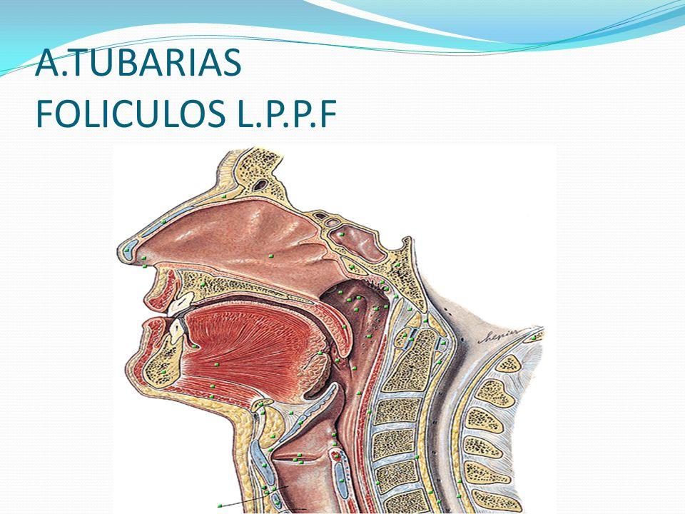 A.TUBARIAS FOLICULOS L.P.P.F