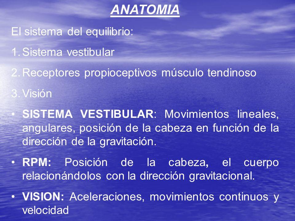 ANATOMIA El sistema del equilibrio: Sistema vestibular