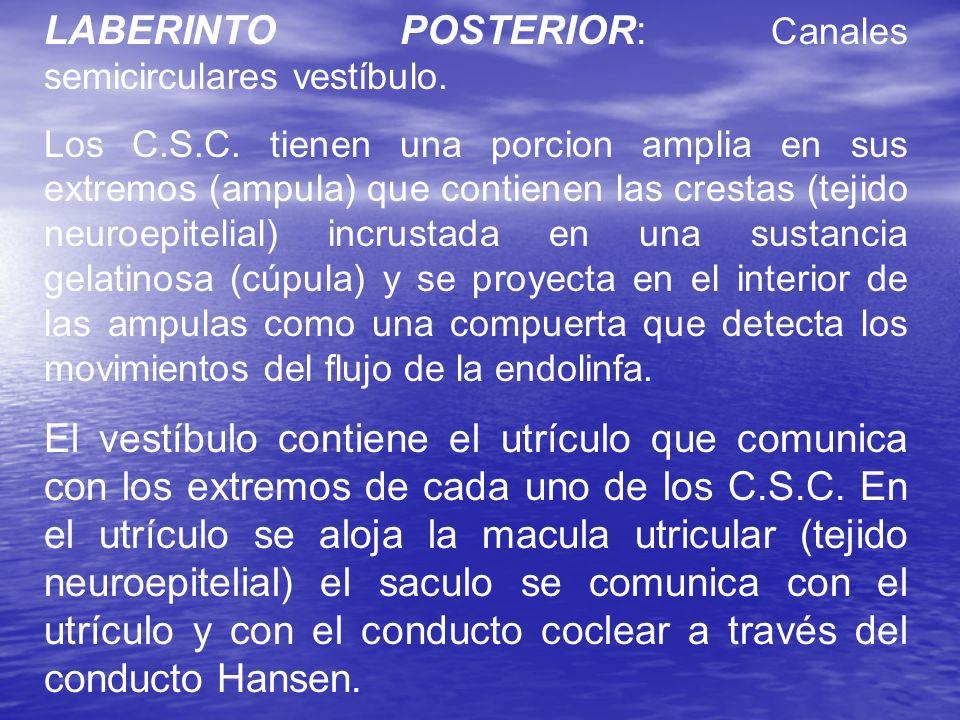 LABERINTO POSTERIOR: Canales semicirculares vestíbulo.