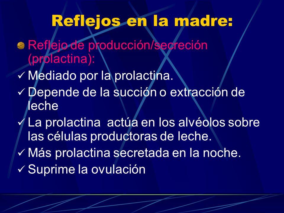 Reflejos en la madre: Reflejo de producción/secreción (prolactina):