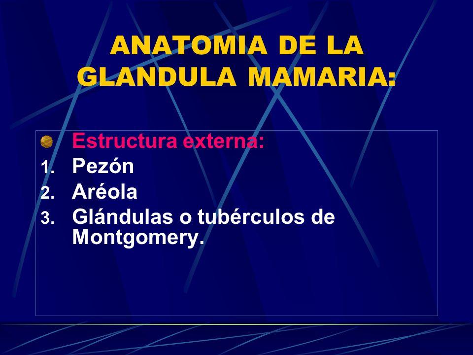 ANATOMIA DE LA GLANDULA MAMARIA: