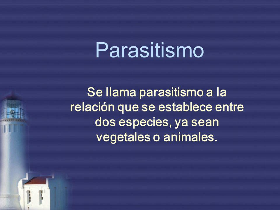 Parasitismo Se llama parasitismo a la relación que se establece entre dos especies, ya sean vegetales o animales.