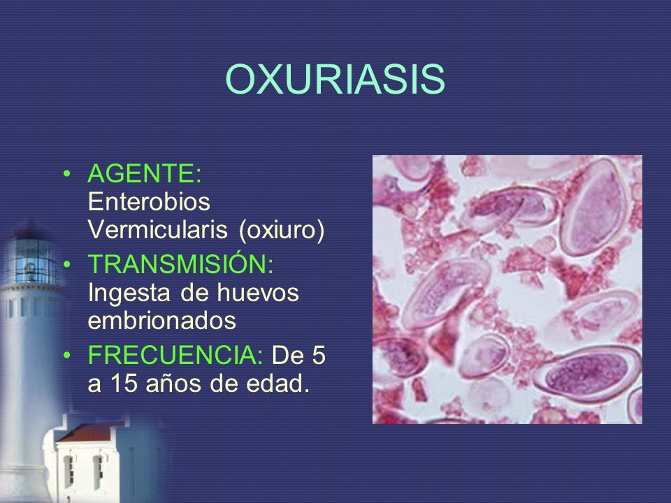 OXURIASIS AGENTE: Enterobios Vermicularis (oxiuro)