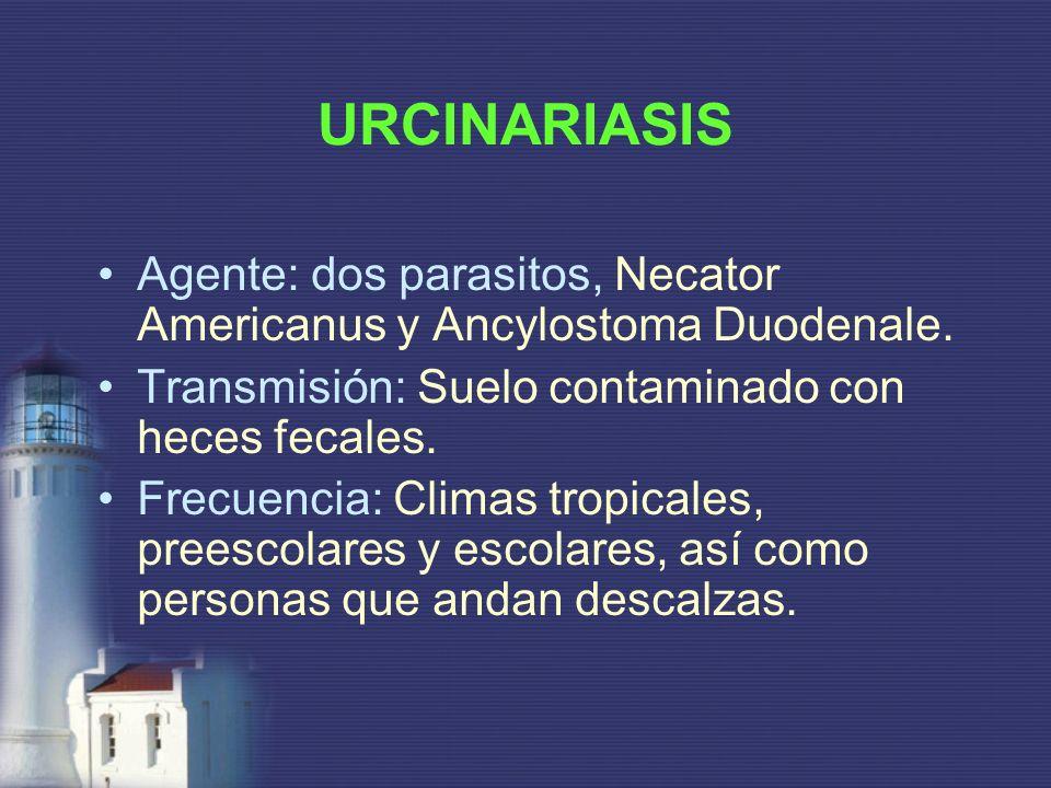 URCINARIASISAgente: dos parasitos, Necator Americanus y Ancylostoma Duodenale. Transmisión: Suelo contaminado con heces fecales.