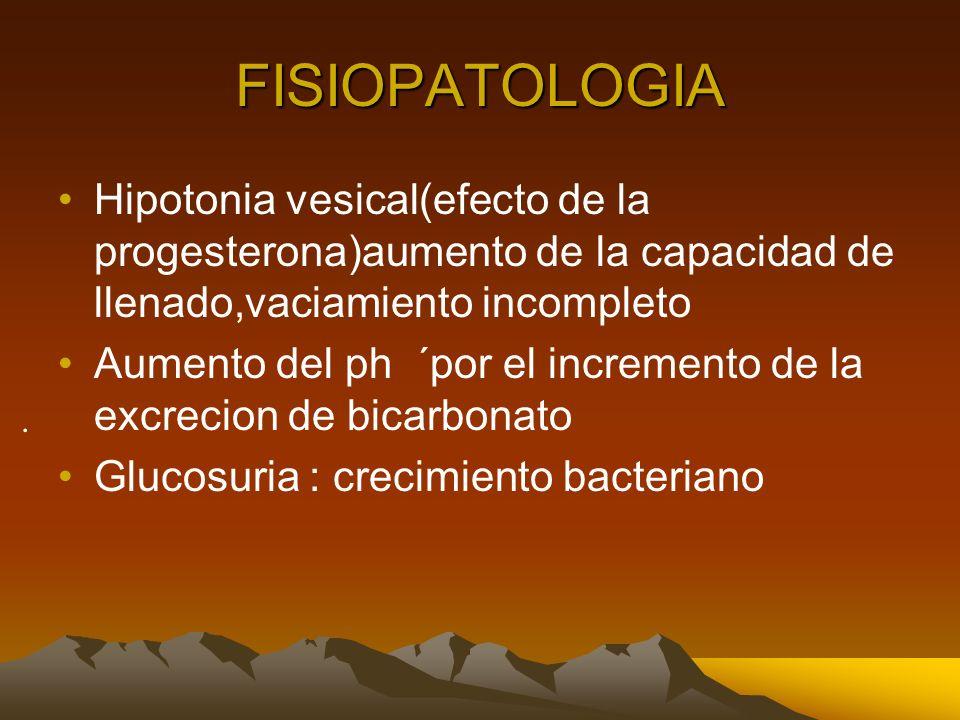 FISIOPATOLOGIAHipotonia vesical(efecto de la progesterona)aumento de la capacidad de llenado,vaciamiento incompleto.