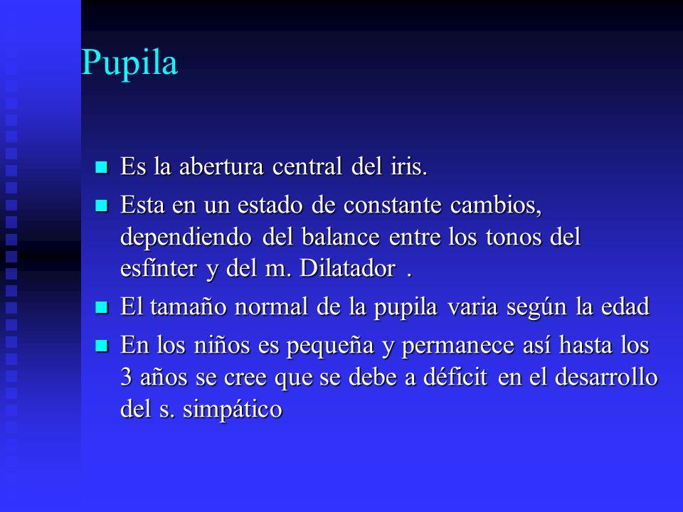 Pupila Es la abertura central del iris.