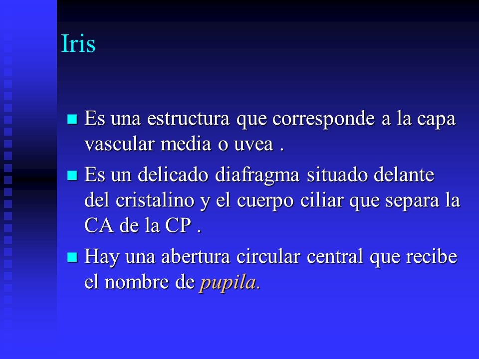 Iris Es una estructura que corresponde a la capa vascular media o uvea .