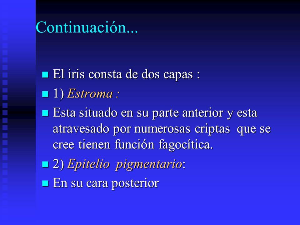 Continuación... El iris consta de dos capas : 1) Estroma :