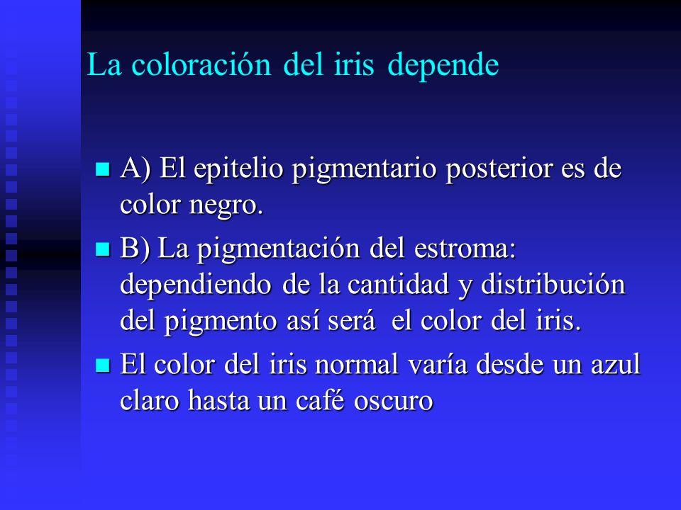 La coloración del iris depende
