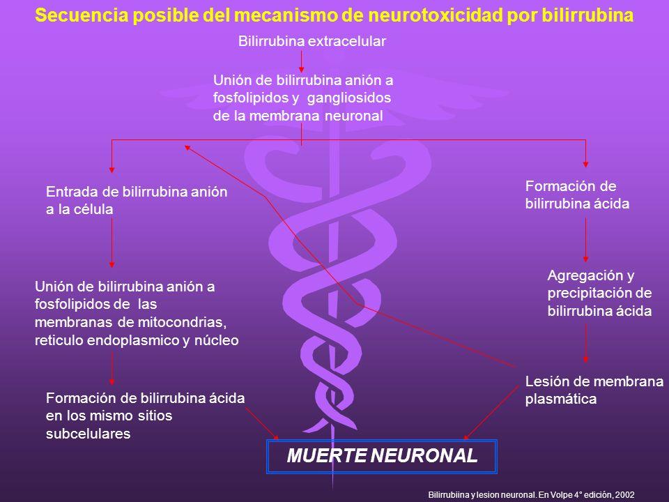 Secuencia posible del mecanismo de neurotoxicidad por bilirrubina