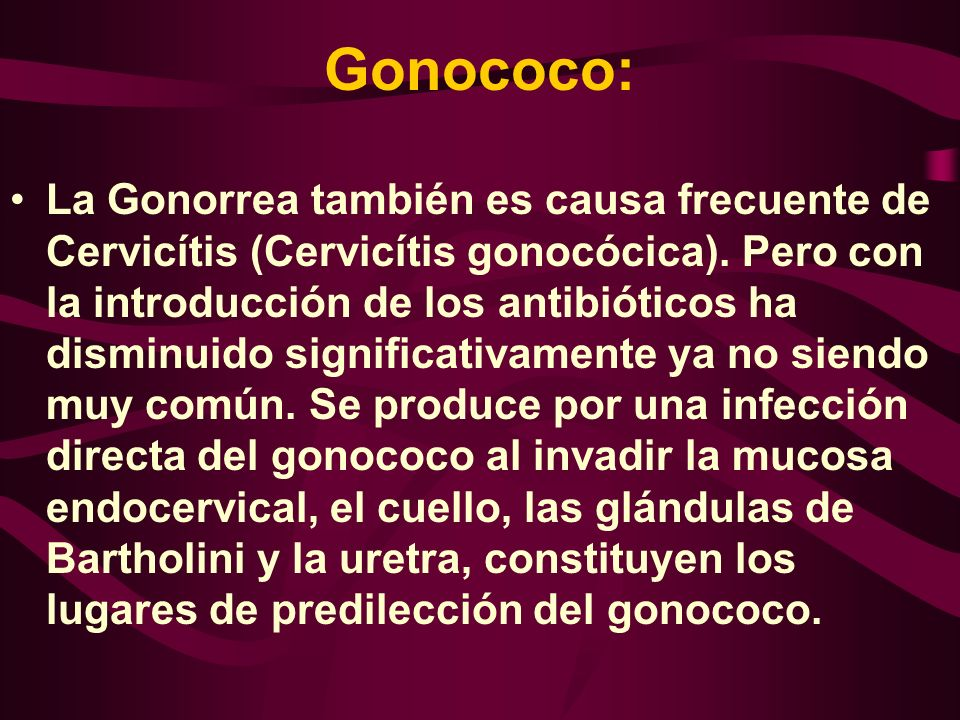 Gonococo:
