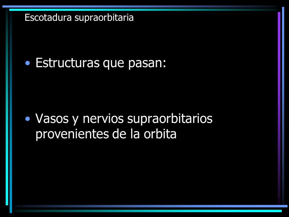 Escotadura supraorbitaria