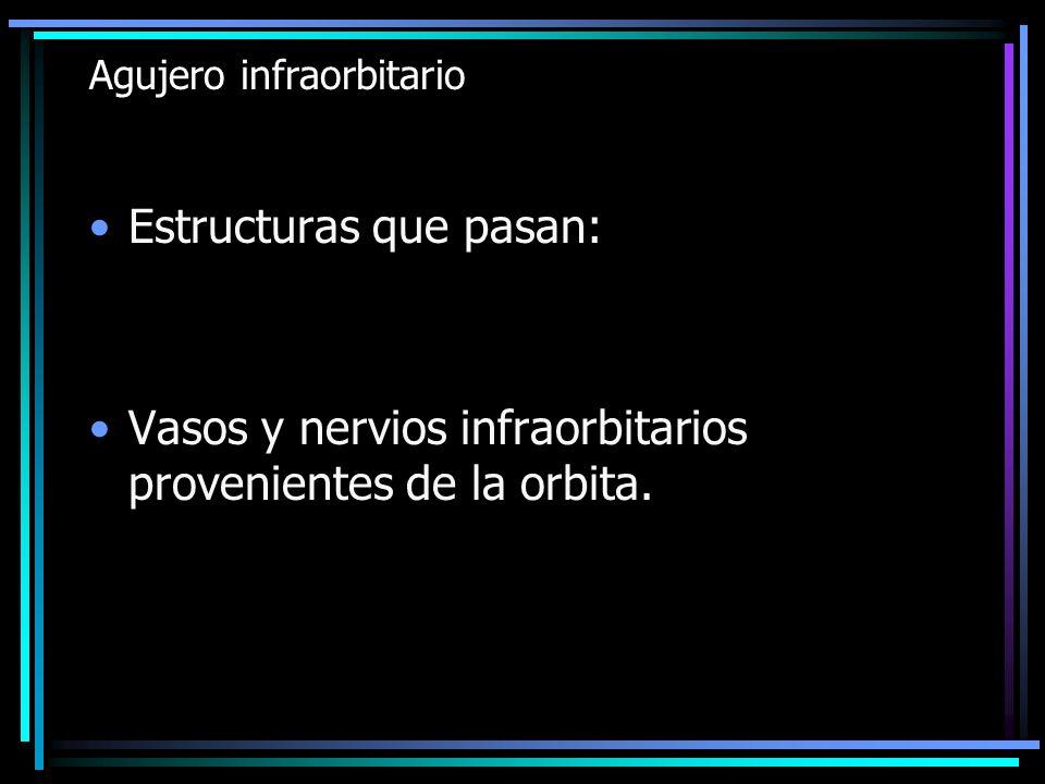 Agujero infraorbitario