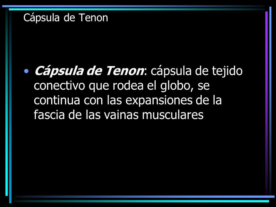 Cápsula de Tenon