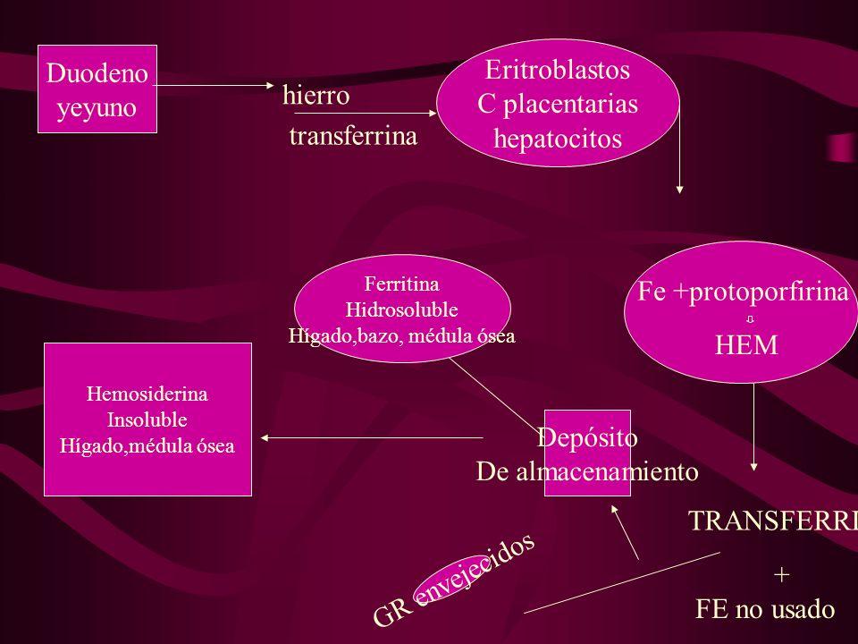 Hígado,bazo, médula ósea