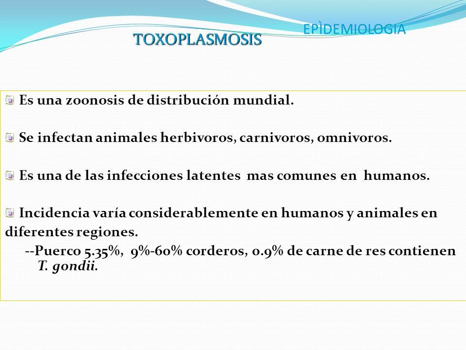 EPÌDEMIOLOGIA TOXOPLASMOSIS Es una zoonosis de distribución mundial.