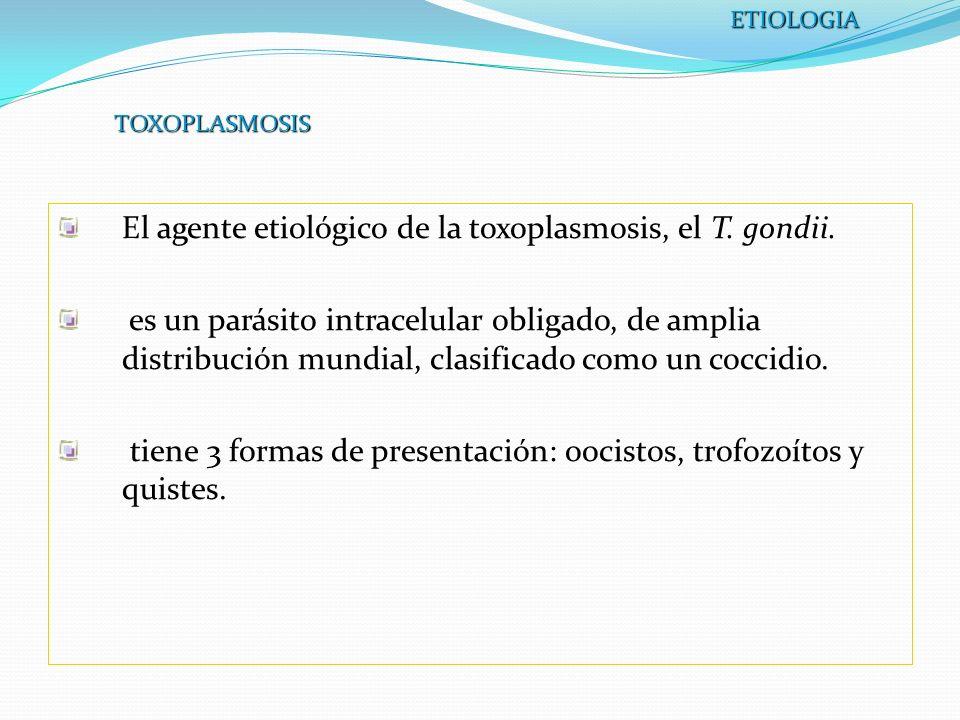 El agente etiológico de la toxoplasmosis, el T. gondii.